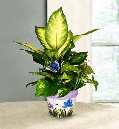 Les astuces pour prendre soin des plantes vertes for Plante verte maison